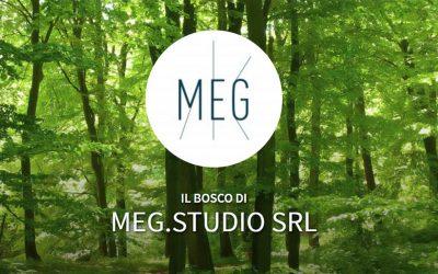 Con Tree-Nation, Meg.studio compensa le emissioni di CO2